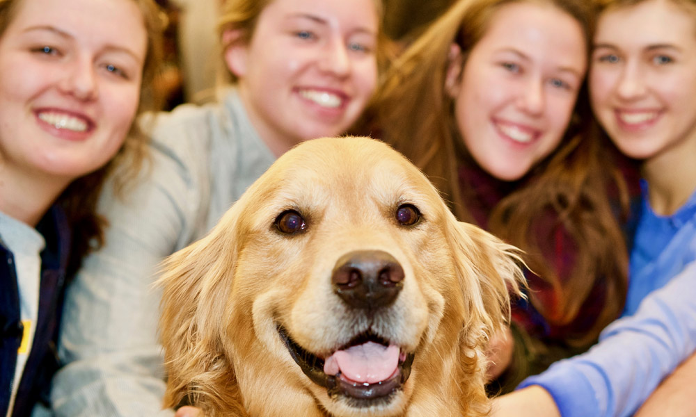 Golden retriever smiling for the camera with a group of students