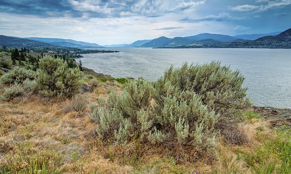 Aerial view of Okanagan Lake.