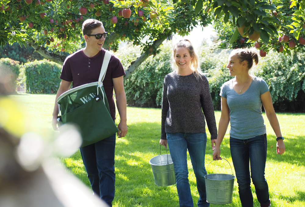 Students picking apples in an orchard.