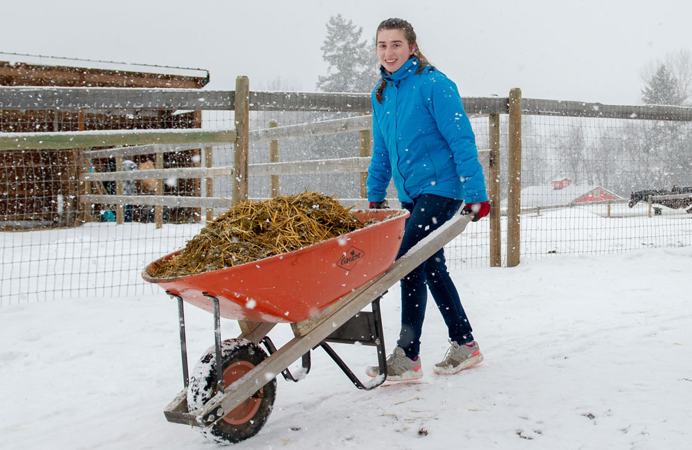 Student volunteer pushing hay in a red wheelbarrow