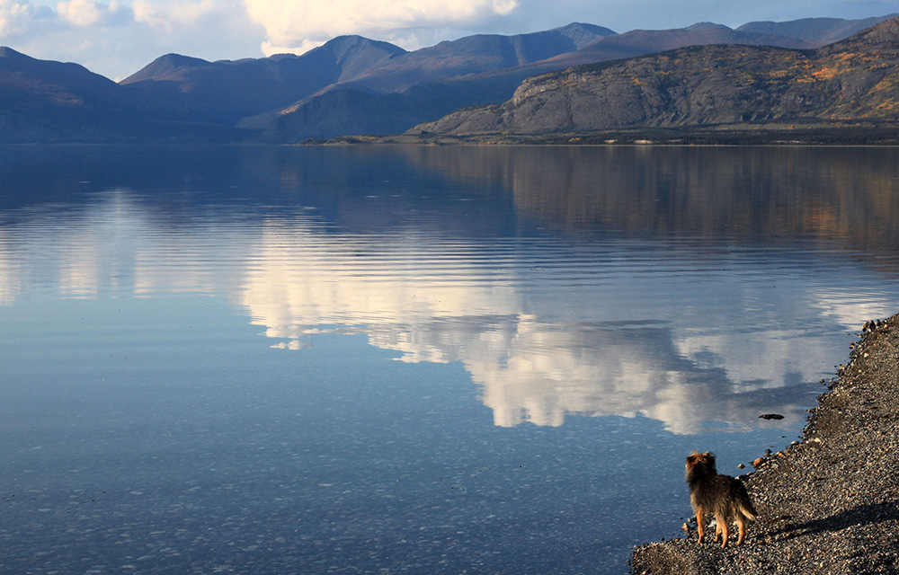 Dog standing by pristine reflective lake