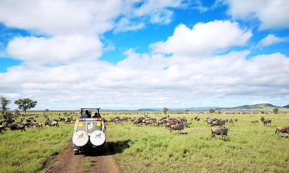 A safari jeep in Serengeti National Park