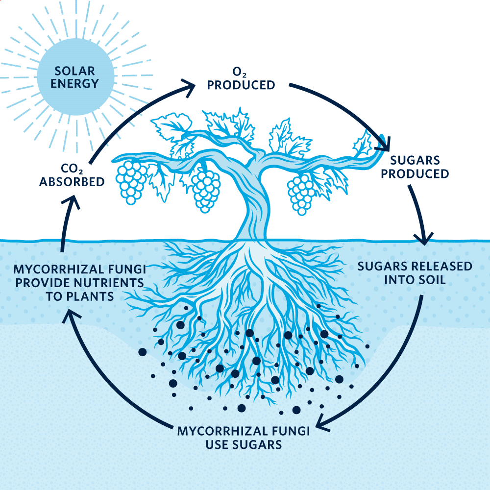 Illustration of the photosynthesis process