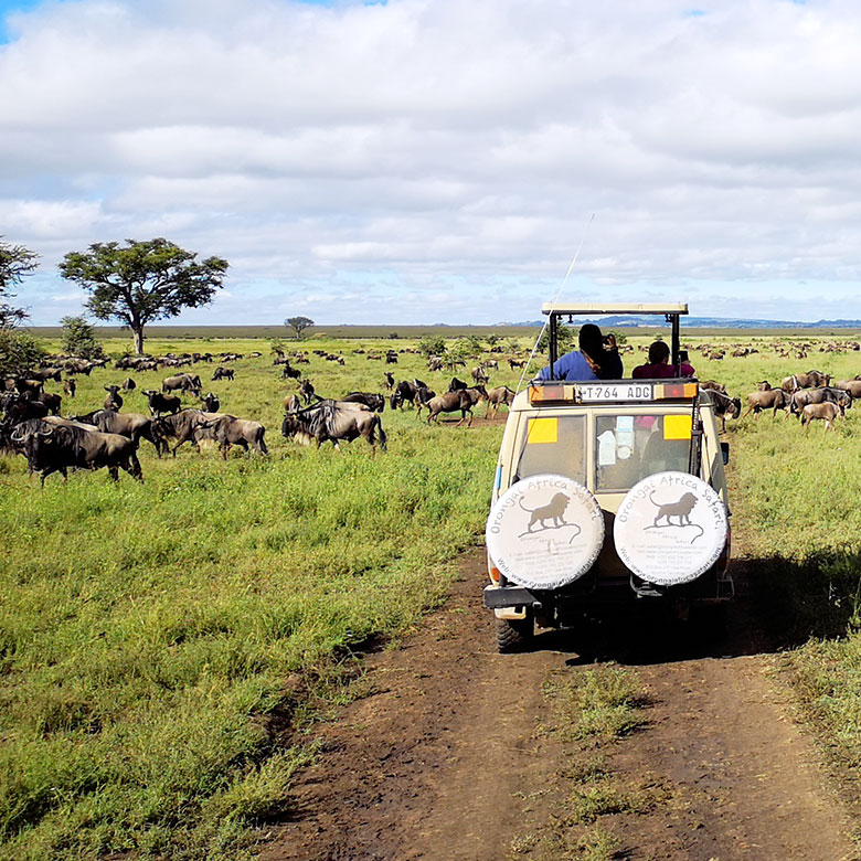 Student on a safari during a Go Global trip to Tanzania
