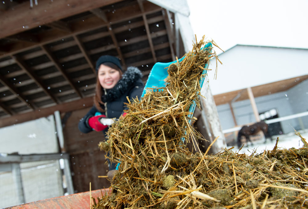 A student scoops hay at a farm during a Community Service Learning volunteer placement.