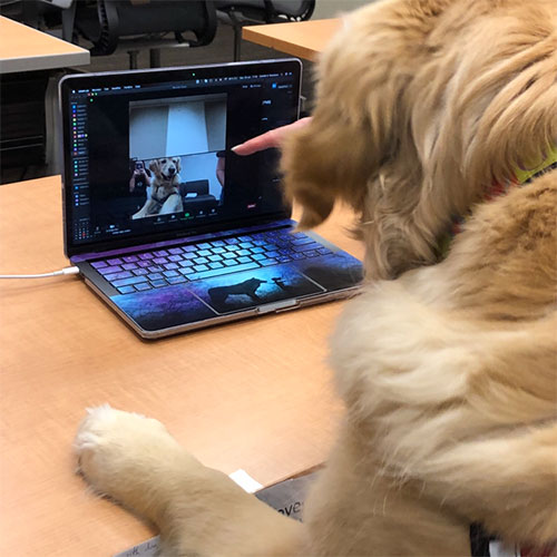 A cute dog doing a virtual visit