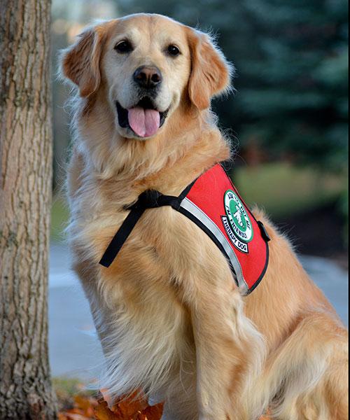 Green's original therapy dog, Niki