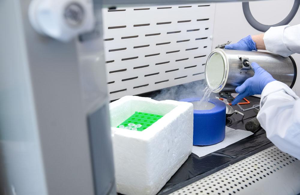 Samples are processed using liquid nitrogen.