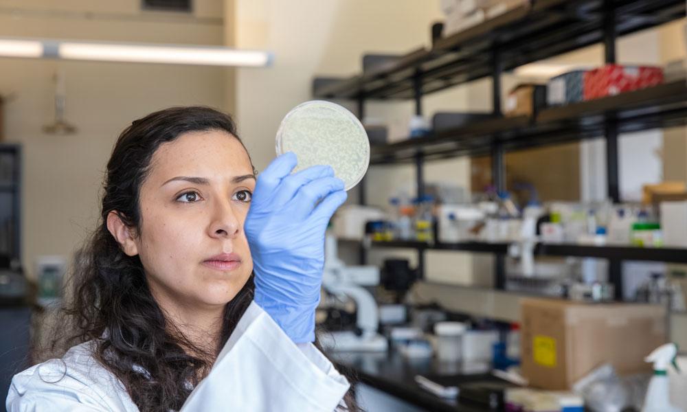 Doctoral student Andrea Verdugo Meza is exploring designer probiotics.